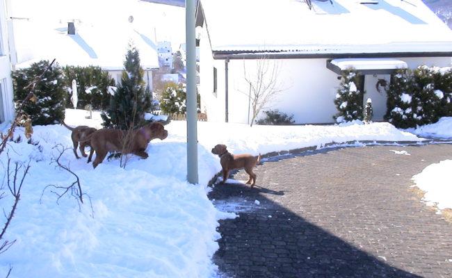 mama-und-papa-zu-besuch-5-03-7-03-2010-30