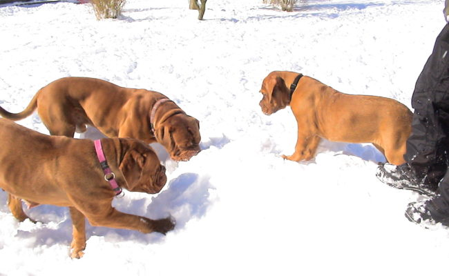 mama-und-papa-zu-besuch-5-03-7-03-2010-36