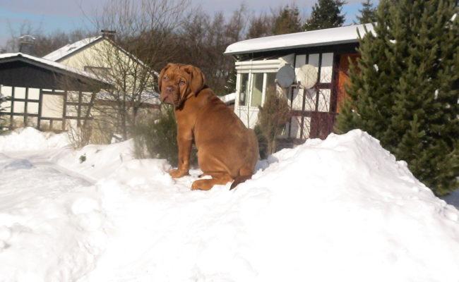 mein-eigener-rodelberg-17-02-2010-011-1