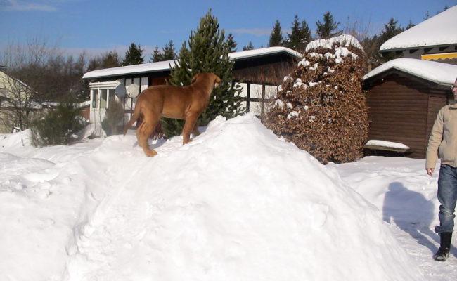 mein-eigener-rodelberg-17-02-2010-011-9